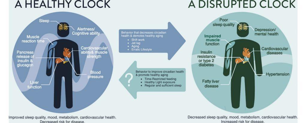 Graphic illustrating healthy vs. unhealthy circadian rhythm eating